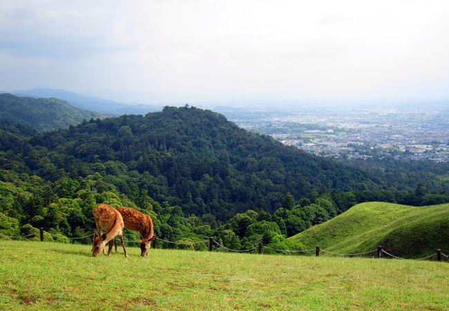 奈良盆地を望む。