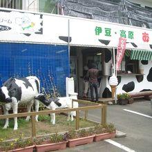 牛がお出迎え。