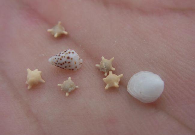 星砂と貝殻たち