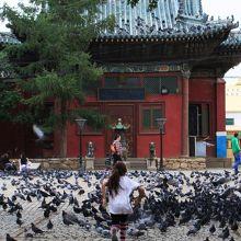東側の大講堂のある敷地にもハトがいっぱい。