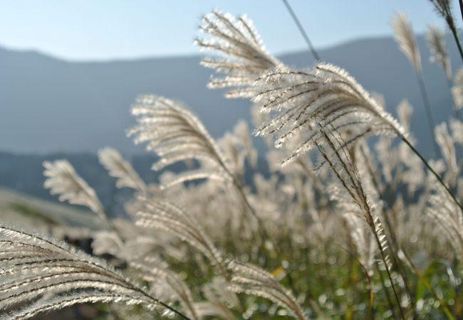 仙石原高原