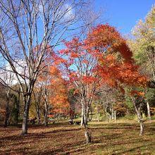 紅葉した木々が綺麗だった。