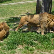 サファリーパークの動物たち