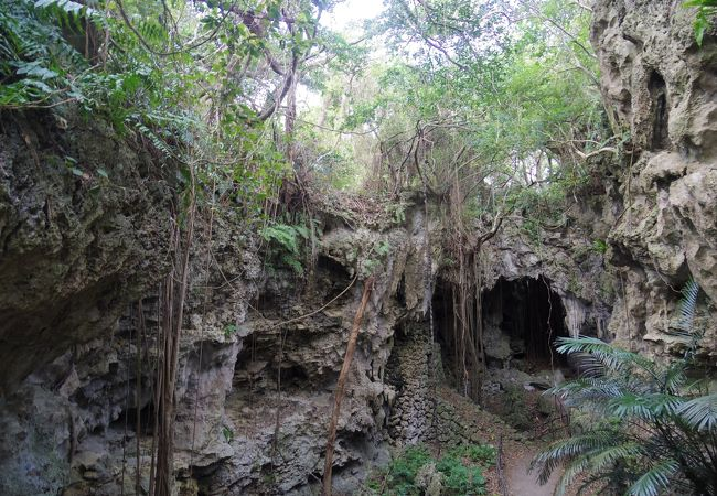 木と岩の共存