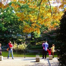 黄葉の横浜公園