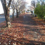 落ち葉が積もったサイクリングロード