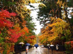 秋田県のツアー