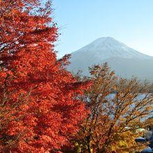 11月は紅葉と湖と富士山は絶景だよ!(紅葉まつり・回廊)