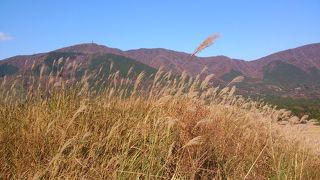すすき野原は晴れた日に訪れたい