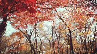 庭園の紅葉が絶景!