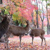 奈良公園 写真