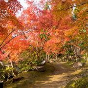 水景園に紅葉を見に行ってきました。