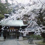 隠れた桜の名所でもある神社
