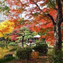 雲形池周辺の紅葉がきれいでした。公園内いたるところで銀杏の黄葉が見られました。
