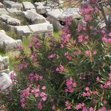 ローマ時代の共同墓地