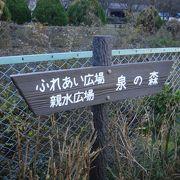 自然に恵まれた公園