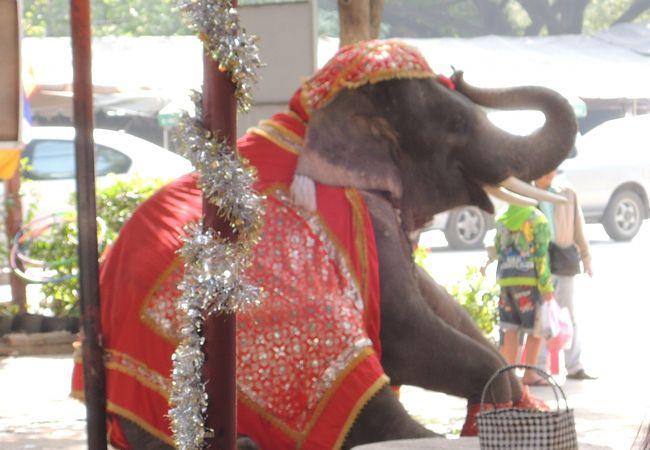 象が踊っている姿なんかも見られます。