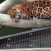 静岡市立日本平動物園 写真