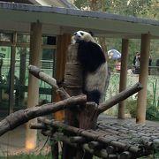 広州動物園