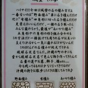 麺はきし麺のような太さでコシがある沖縄そば