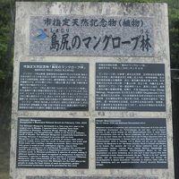 島尻のマングローブ林 写真