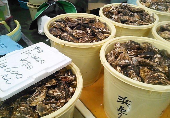 プリプリの大粒牡蠣が堪能できる日生かきまつり