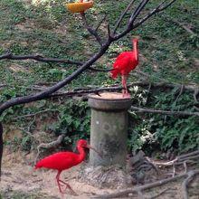 美しかった赤い鳥