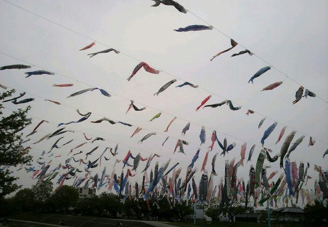 1000匹のこいのぼりが空を泳ぎます