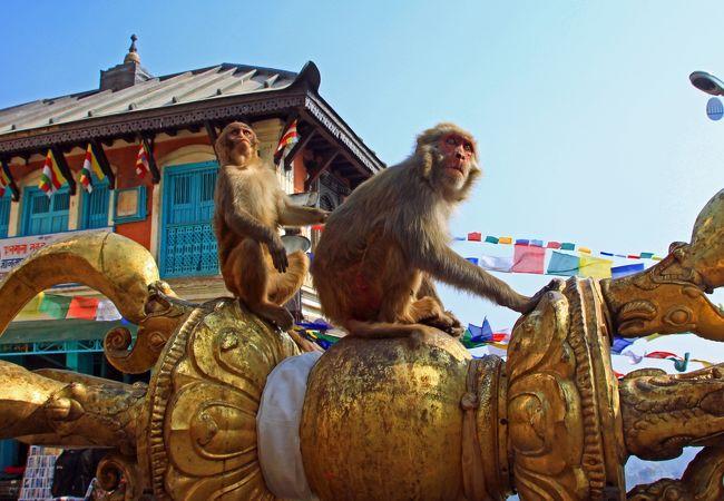 境内には猿が多いです。