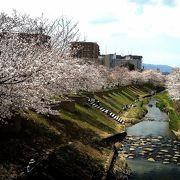 佐保川沿いの桜並木