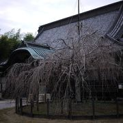 きれいなお寺でした。