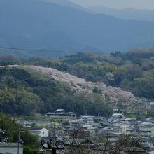 約500本の桜の樹があり、見応えがあります。桜の咲く季節にはぜひ!