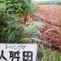 写真:人舛田