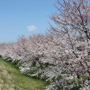 圧巻の桜に感動!!お奨めです。