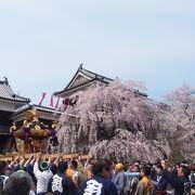 満開の枝垂桜は圧巻