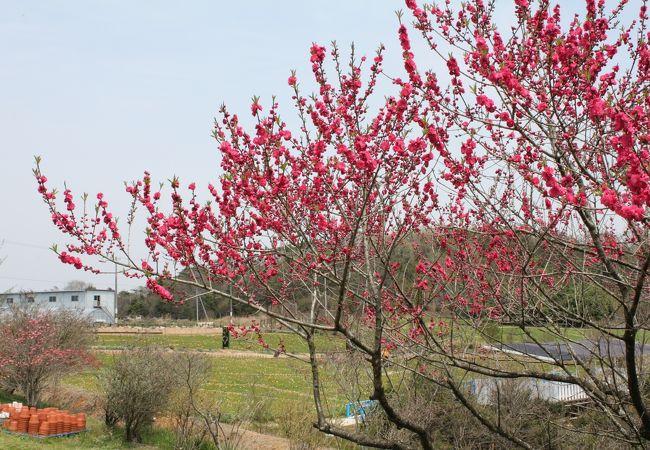 香山ラベンダーの丘
