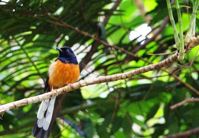 木の枝には可愛らしい小鳥