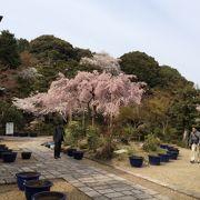 関西花の寺25ヶ所の1つ