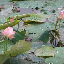 蓮池潭の湖畔にあります