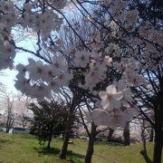 夜桜を見に行くときは防寒対策を!