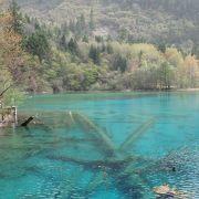 とても綺麗な池。色と透明度がすごい!!
