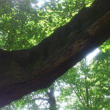 大きな木がたくさんあります。
