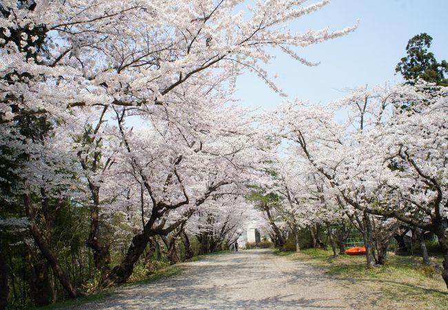 寒河江市内からも近いし、お花見には最適な場所