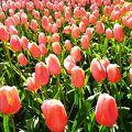 お花に興味が無かったのに急にお花好きに!