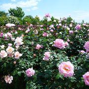 お花好きに超おススメのガーデン