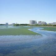 面積41haの広さを持つ貴重な干潟