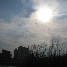 汐入公園から金環日食を見る
