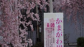 かまがわ 川床 桜まつり