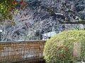 源泉かけ流しの湯 御宿 さか屋 写真