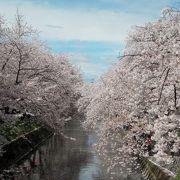 愛知県ではダントツナンバー1の観桜名所(だと私は思う)